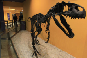The Museum of Natural Sciences