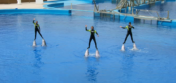 Fun Dolphin Show At The Oceanografic - Best things to do in Valencia