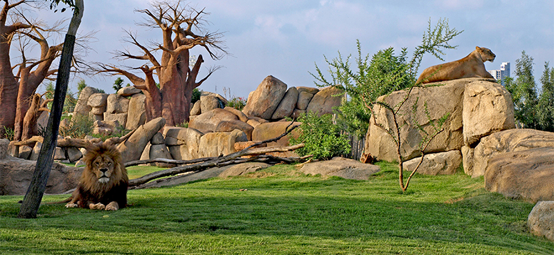 Bioparc - Best things to do in Valencia